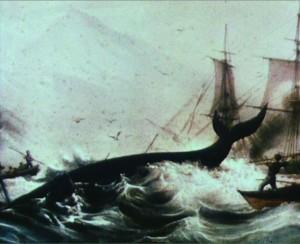 Whale kill 2
