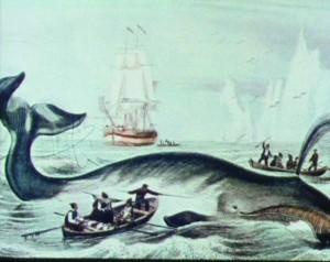 Whale kill