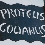 Proteus_Gowanus